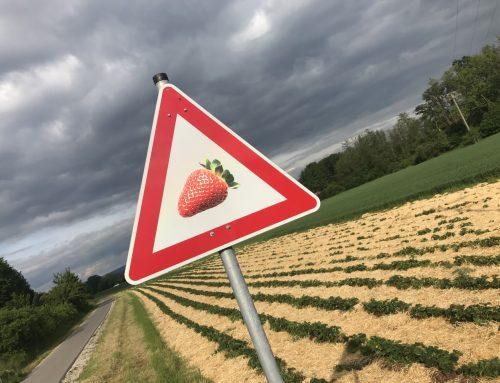 Ende des Erdbeeranbaus